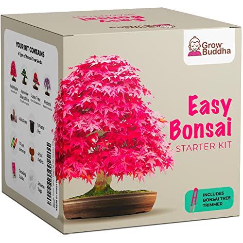 GROW BUDDHA | Züchte dein eigenes Bonsai-Bäumchen - 4 Arten im Komplett-Set