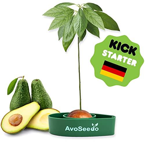AvoSeedo │ das besondere Garten Geschenk - Den eigenen Avocadobaum pflanzen